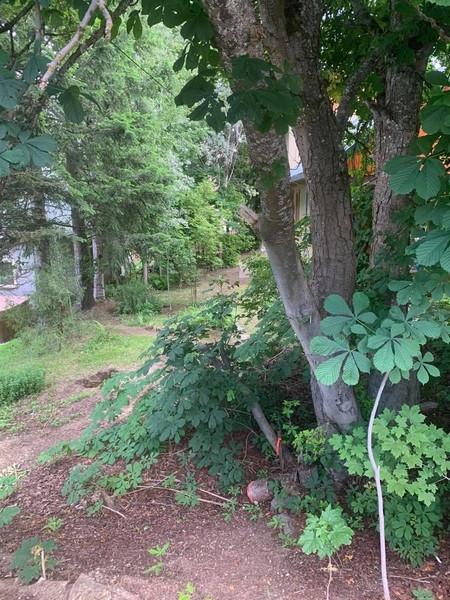 1645 Leroi Avenue, Rossland, British Columbia, V0G1Y0