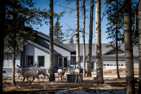 52057 Twp Rd 283 A Township in Rural Rocky View County - House For Sale : MLS# a1074171